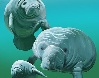 Siesta Key, Florida - Manatees (Art Prints available in multiple sizes)