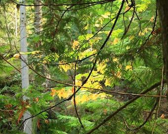 Forest Leaves (unframed)