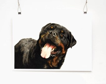 Rottweiler Limited Edition Print