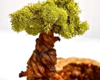 Individual tree for terrarium, terrarium supplies terrarium kit. Miniatures for terrarium. miniature tree.