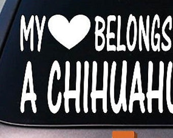 My Heart Belongs To A Chihuahua Sticker Decal *D970*