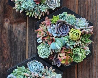 """10""""  Hexagon Vertical Garden"""
