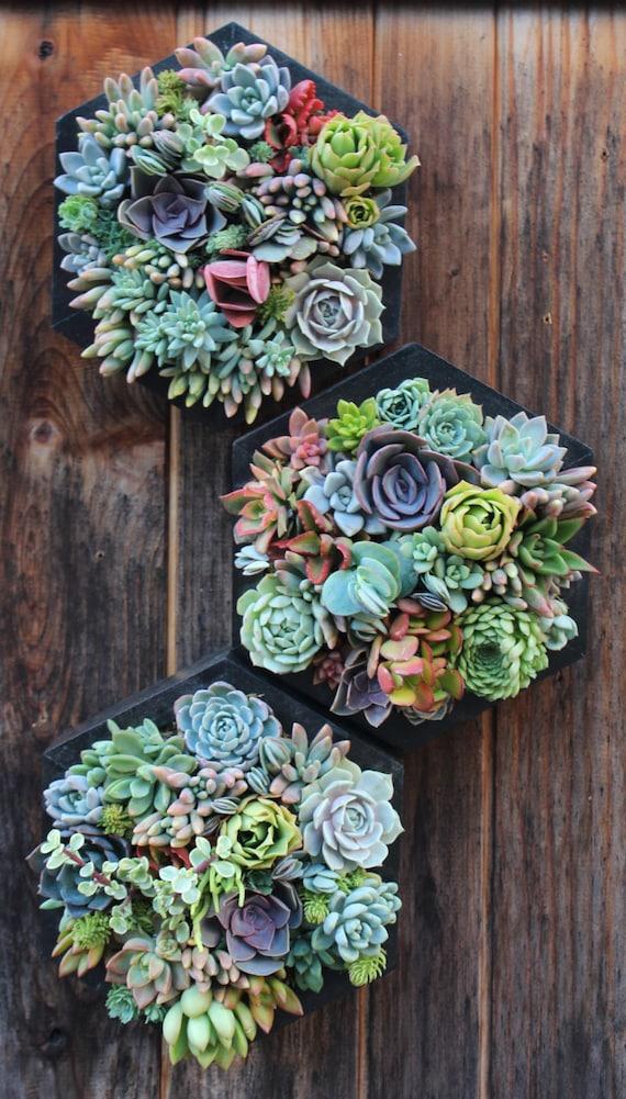 10 hexagon vertical garden planted for Manta para jardin vertical