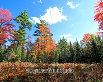 Autumn Nature Photography | Wooded Landscape | Trees | Fall Color | Northern Michigan | North Woods | Colorful Outdoor Wall Art | Fall Print
