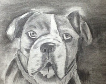 Original Charcoal Bulldog Portrait