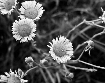 Konza Bloom 1, Photograph