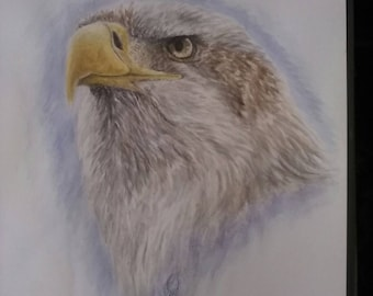 Juvenile Bald Eagle painting