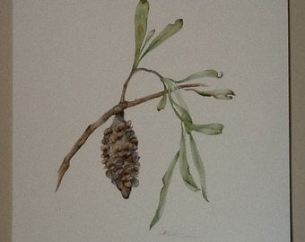 "Australian Native Flora - ""Costal Banksia"""
