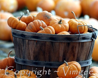 A Basket of Pumpkins #1