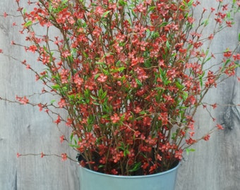Willow Branches with Red Flowers