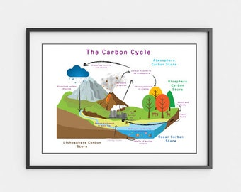 Printable Science Posters - Carbon and Water Cycles
