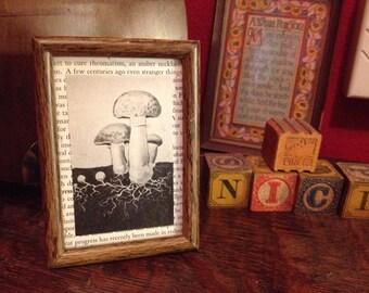 Naturalist Mushroom Illustration