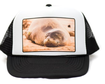 Sleeping Monk Seal trucker hat