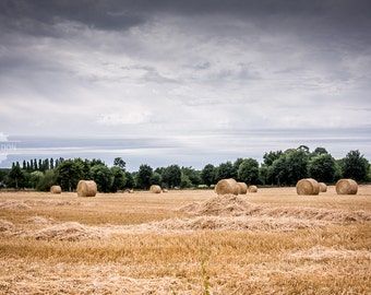 Harvest - wheat field harvest in the French countryside, nature photography with dark skies and sunlit wheat