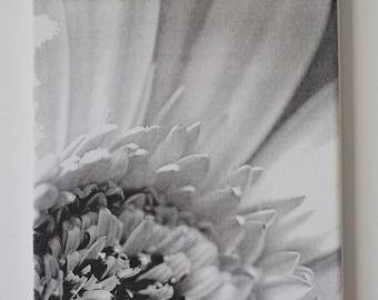 Daisy Canvas