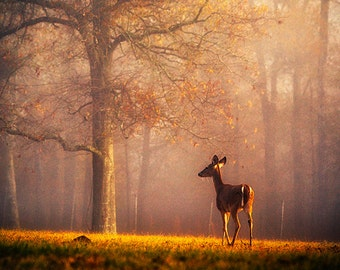 Deer Photography - Animal Decor - Wildlife Wall Art - Nature Decor - Texas Photo - Fog Photo - Morning Light - Ranch Decor - Dreamy Photo