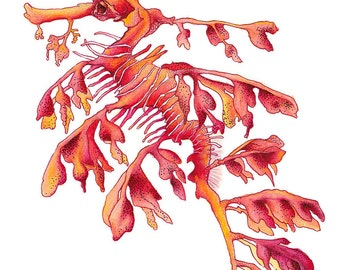 Red Leafy Sea Dragon Seahorse Watercolor Art Print of an Original Watercolour Illustration Hamptons Style Artwork