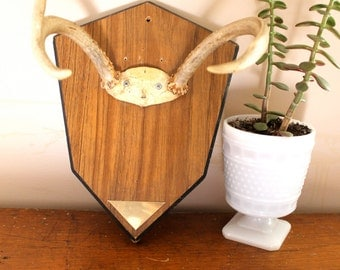Cabing Fever... Vintage Mounted Deer Antlers Three Point, Mounted Antlers, Taxidermy, Wall Hanging, Deer Horns