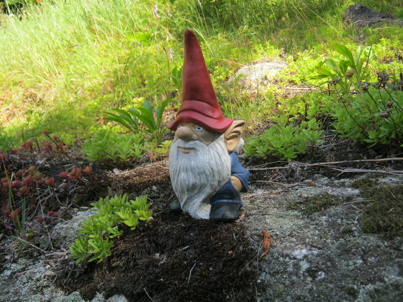 Gnome In Garden: Gnome Statue Garden Gnome Cement Statue Painted Concrete