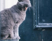 Cats of Amsterdam - Jane - Photography