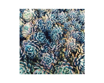 Succulents / nature  / plants / Photography Print / typography / travel / sizing options 4x4, 5x5 or 8x10
