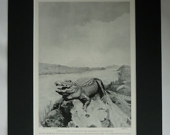 1901 Antique Crocodile Print, Nature Gift, Alligator Decor, Available Framed, Reptile Art, Old Natural History Photography, Dentist Picture