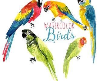 Watercolor Tropical Birds, Parrot Clip Art, Bird Clipart, Exotic Clip Art, Tropics Illustration, Tropical Bird Clipart, Tropics Clipart