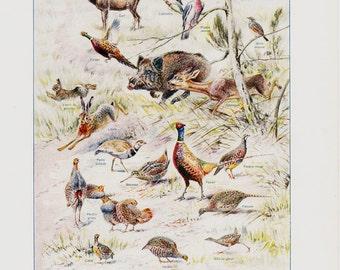 1926 Vintage animal print. deer, boar, birds, partridge