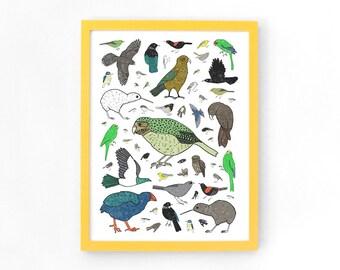 New Zealand Birds Limited Edition A3 Archival Art Print