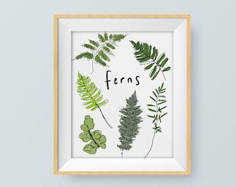 nature prints, nature art, botanical print, botany art, plant prints, fern print, artwork prints,botanical illustration,prints illustrations