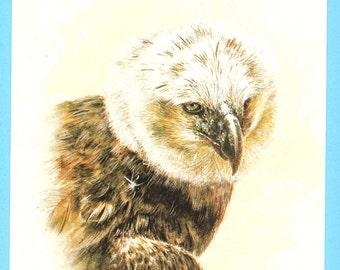 Harpy Eagle print