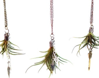 Air Plant Necklaces