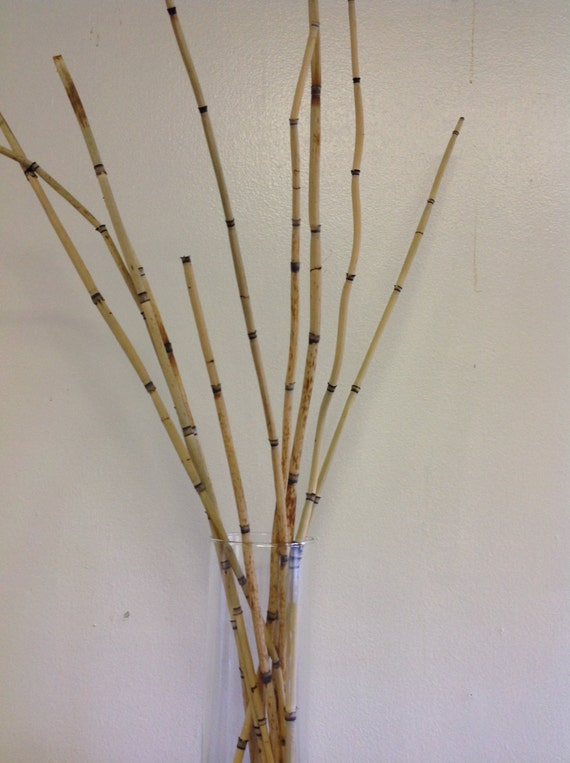Horsetail Reed Dried Flower Sticks Bamboo by UniqueFlowerChic