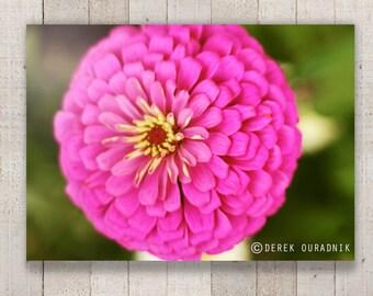 Derek Ouradnik Original Fine Art Photography Nature Flower Photo Print