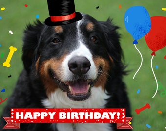 Dog and Cat Cards - Dog Birthday Card - Card from Dog - Pet Birthday Card - Photo Cards - Happy Birthday Cards