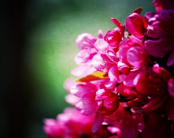 "Pink Flower Photography   Spring Photography   Michigan Art   Flower Print   Flower Art   Nature Art   ""Magenta"""