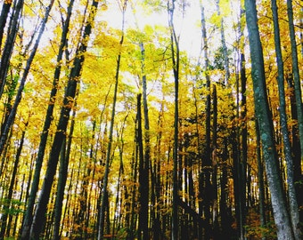 Instant Digital Download Fall Trees Photography Color Photography Nature Still Life Fine Arts