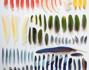 Rainbow Feather Fine Art Print