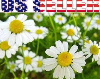 500+ ORGANIC German Chamomile Seeds Flower Herb Heirloom NON-GMO Fragrant