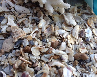 SUPPLIES: 2 CUP-Small Pieces of Sea Shells -Sand and Shells - Natural Shell. Crushed Seashells -Fairy Garden Accessories.{B4-56#00270}