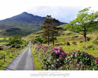 Road to Lochbuie, Isle of Mull