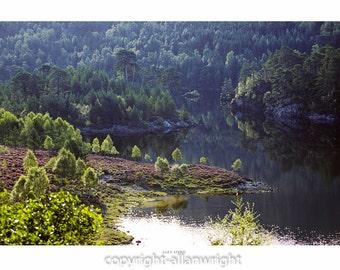 Glen Affric pines
