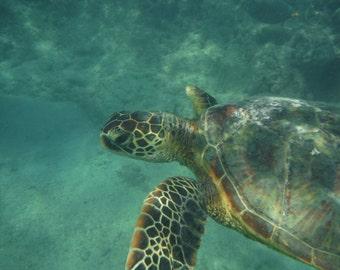 Original Photo Art Magnets - Sea Turtle