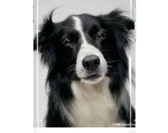 Border Collie Case