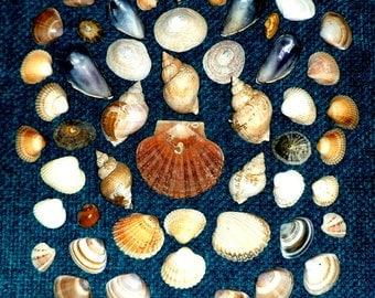 SEA SHELLS. 100 Mixed Shells.