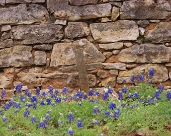 Cross and Bluebonnets, fine art photo, color photograph, landscape picture, flowers, whimsy photography, rock fence, outdoor, blue, stone