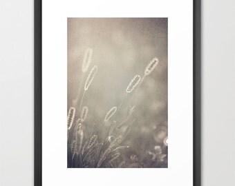 nature photography- sunlight- soft beige- pretty neutrals - Sunlit Evening  fine art photographs