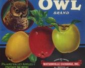 Owl Apple Crate Label Watsonville