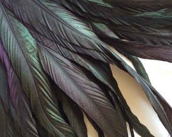 COQUE Tail Feathers  / Iridescent Black with Dark plum, aubergine highlights  /  202 - A