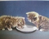 SALE !!! Antique Postcard. From my album Cats and Kittens.  1950 era